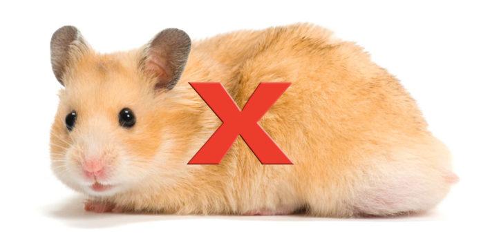 x hamster