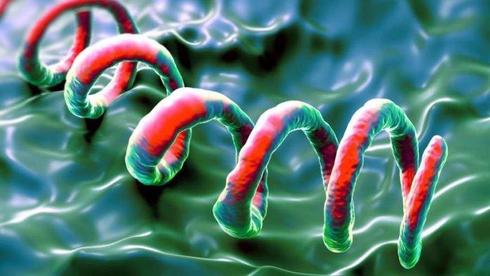 Syphilis-Ausbruch